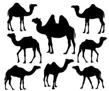 Camel Silhouette Vector Icon L...