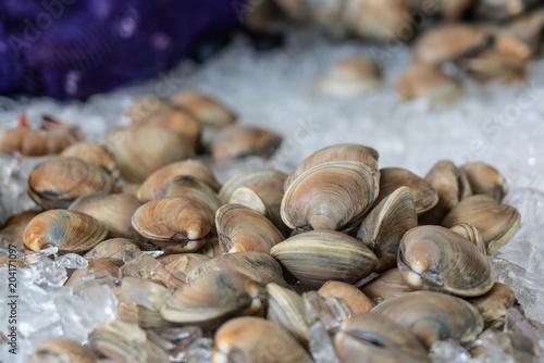 Fényképezés clams on ice at the market