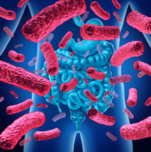 Intestine Bacteria