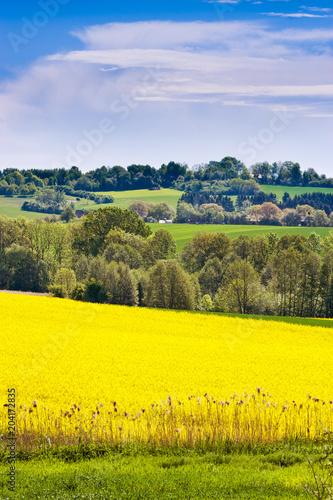 spring agriculture - yellow rape field, Bohemian Paradise landscape, Czech repub Poster