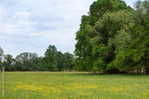 In de dag Pistache Meadow with flower big trees. Czech landscape