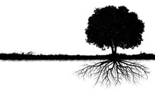Big Tree Silhouettes