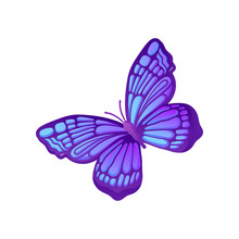 Beautiful Purple Butterfly Wit...