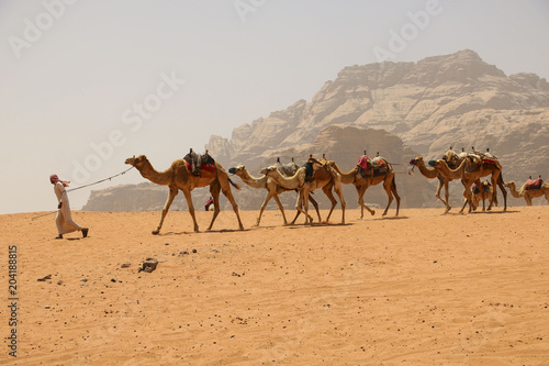 Photo  Caravan of camels in Wadi Rum desert in Jordan