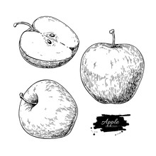 Apple Vector Drawing. Hand Dra...