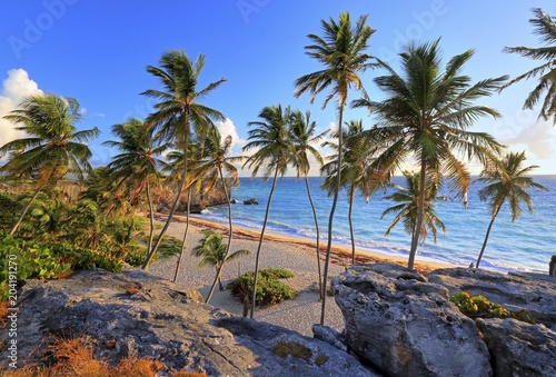 Foto op Plexiglas Strand Bottom Bay, sandy beach with palm trees on the Atlantic Ocean, Barbados, Lesser Antilles, Caribbean, West Indies, Central America