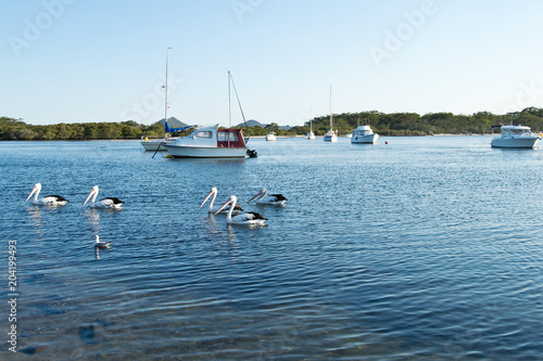 Poster Oceanië Pelicans and boats on Myall Lake in Australia.