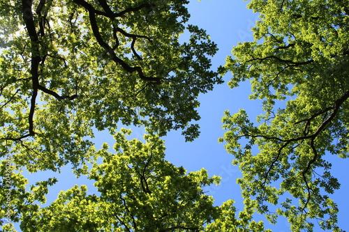 Foto op Canvas Bomen Drei Eichen