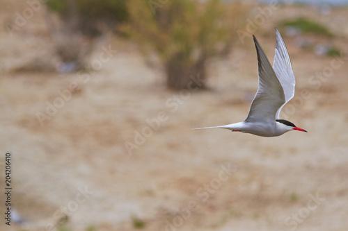 Little bird flying at full speed Poster