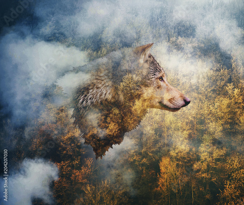 Tuinposter Wolf Photo Collage: Head of the Wolf on the Background of Autumn Forest