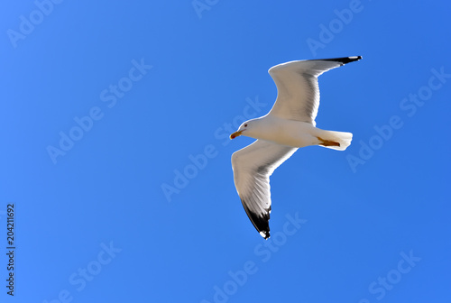 Seagull in Cadiz waterfront, Andalucia, Spain