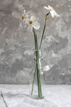 Beautiful Narcissuses In The G...