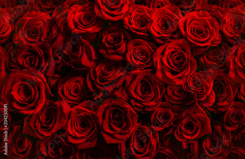 million fresh red roses isolated on a black background. Greeting card with roses