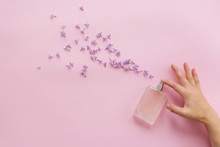 Perfumery And Floral Scent Concept. Hand Holding Stylish Bottle Of Perfume With Spray Of Lilac Flowers On Pink Background. Creative Trendy Flat Lay With Space For Text. Modern Image