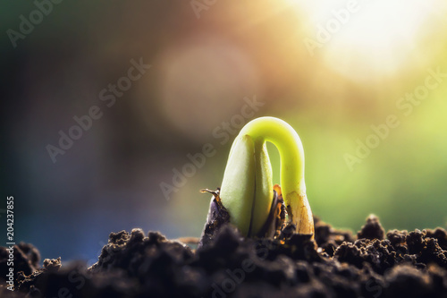 Fotografie, Obraz new green sprout growing on soil with sunshine