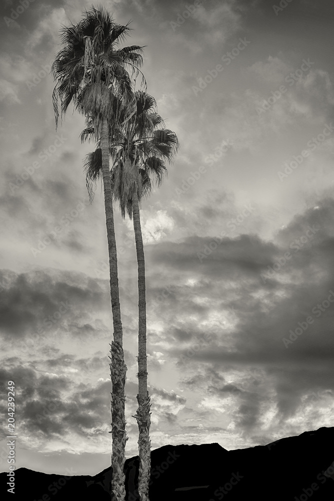 Oaza w Palm Springs <span>plik: #204239249 | autor: Laurin Rinder</span>