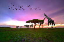 Safari Wildlife Animal In The Nature Of Field Freedom Living At Sunset Scenery