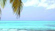 Coconut palm tree on tropical shore
