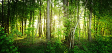 The Natural Wild Forest Illumi...