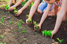 Children's Hands Planting Youn...