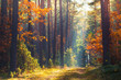 canvas print picture - Autumn forest scene