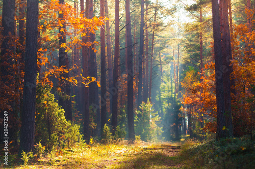 Foto op Canvas Herfst Autumn forest scene