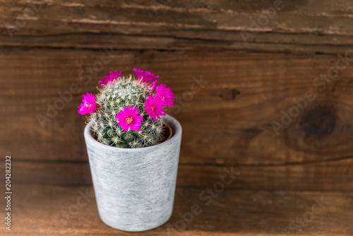 Tiny Cactus on tiny bamboo, tiny moon, tiny trees, tiny earth, tiny plants, tiny blanket, tiny island, tiny succulents, tiny terrariums, tiny tomatoes,