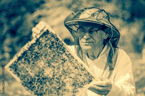 Fototapeta Pszczelarz podczas wiosennej inspekcji w pasiece  obraz