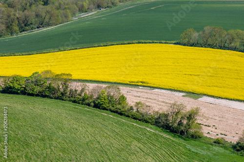 Foto op Canvas Meloen Patchwork Landscape