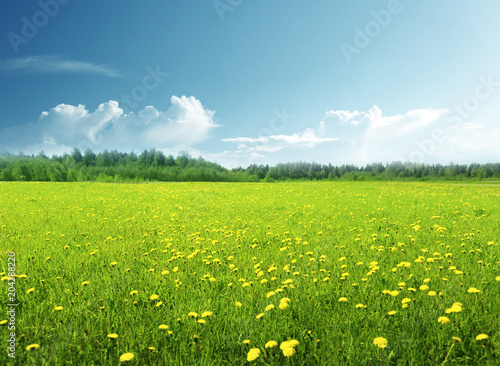 Montage in der Fensternische Lime grun field of spring flowers and perfect sky