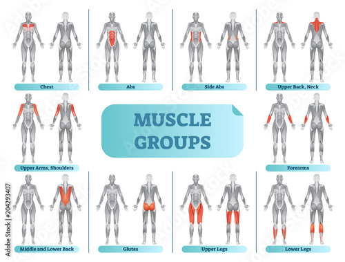 Female muscle groups anatomical fitness vector illustration, sports training informative poster Tablou Canvas
