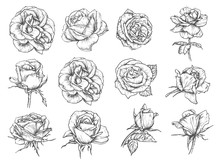 Vector Flowers Roses Sketch Ic...
