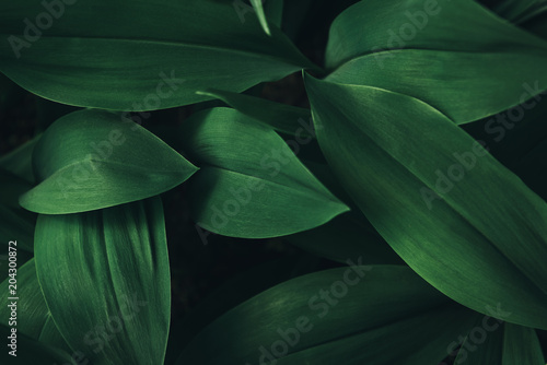 Poster Vegetal full frame image of plant leaves background
