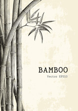 Bamboo Background Hand Drawing...