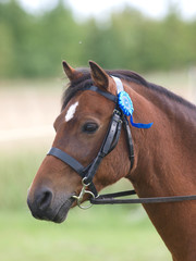 Horse In Bridle Headshot