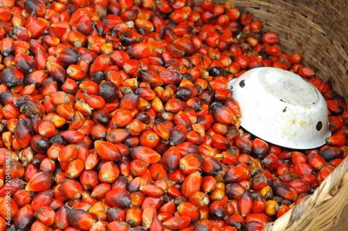 Semi di palma da olio