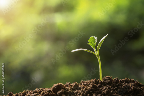 Fototapeta agriculture. young plant  growing on soils with morning light obraz na płótnie