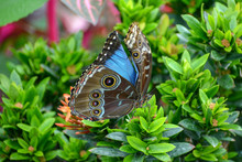 Colorful Blue Butterfly Resting On A Plant