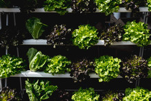 Organic Vegetable On Shelf In Fresh Market