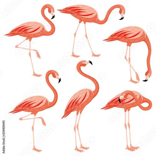 Canvas Prints Pink flamingos set on a white background.