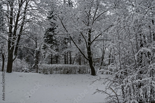 Foto op Canvas Donkergrijs Snowy trees in winter late afternoon, Bankia Sofia