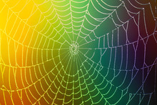 Spider Web With Dew Drop On Colorful Blurred Background. Close-up. Concept