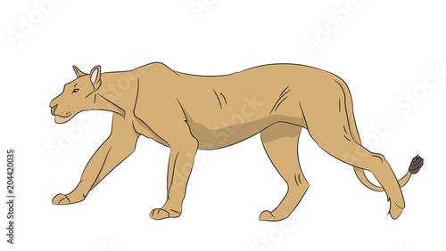 Fotografie, Obraz  lioness color, vector