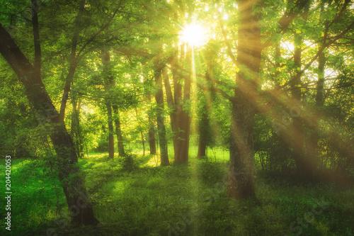 Fototapeten Wald sunny green forest