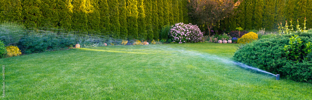 Fototapety, obrazy: Irrigation of the green grass with sprinkler system.