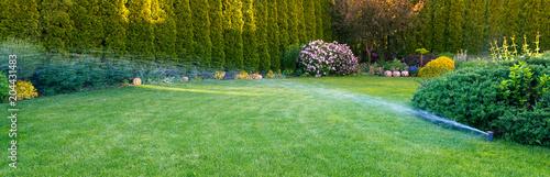 Obraz Irrigation of the green grass with sprinkler system. - fototapety do salonu