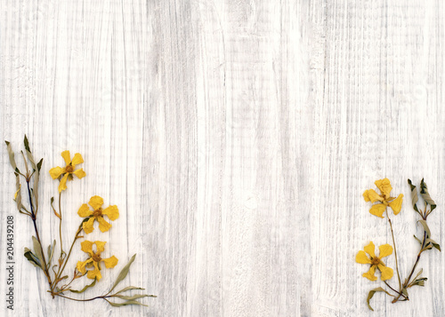 Fotografie, Obraz  Dried Yellow Rock Rose Flowers on a Shabby Chic Rustic White Wood Board Background with room or space for copy, text, or your words in the center and above