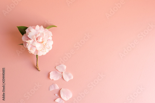 Leinwand Poster High angle view of wilting Japanese camellia flower with scattered petals on pin