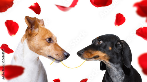 Foto op Canvas Crazy dog couple of dogs in love