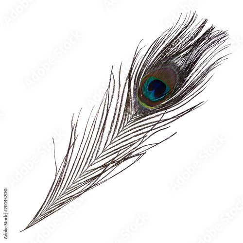 Paon Beautiful Peacock feather isolated on white background.